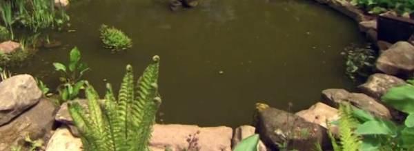 bruin vijverwater